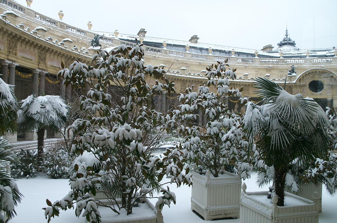Wie mache ich Balkonpflanzen winterfest?
