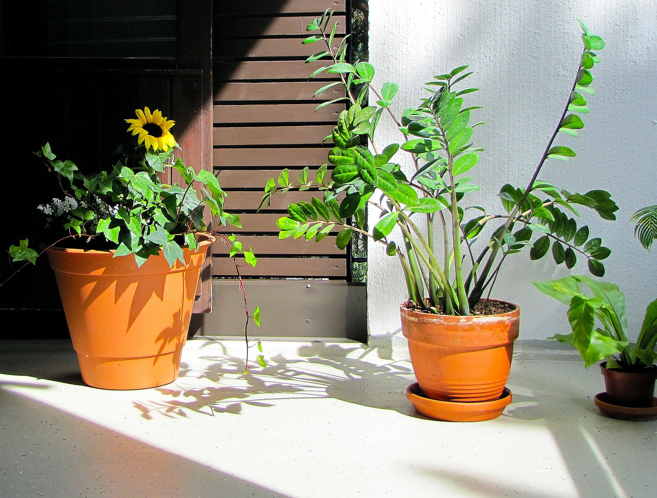 Was sind Balkonpflanzen?