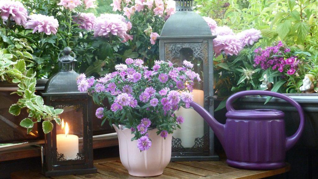 Was kosten Balkonpflanzen?