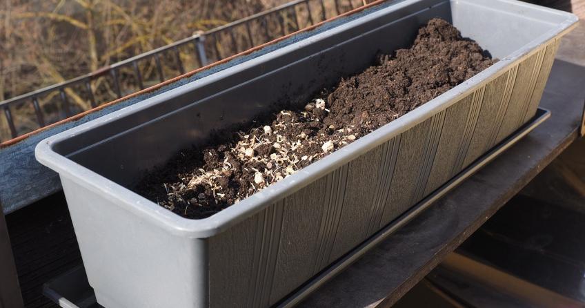 Wann werden Balkonpflanzen gepflanzt?
