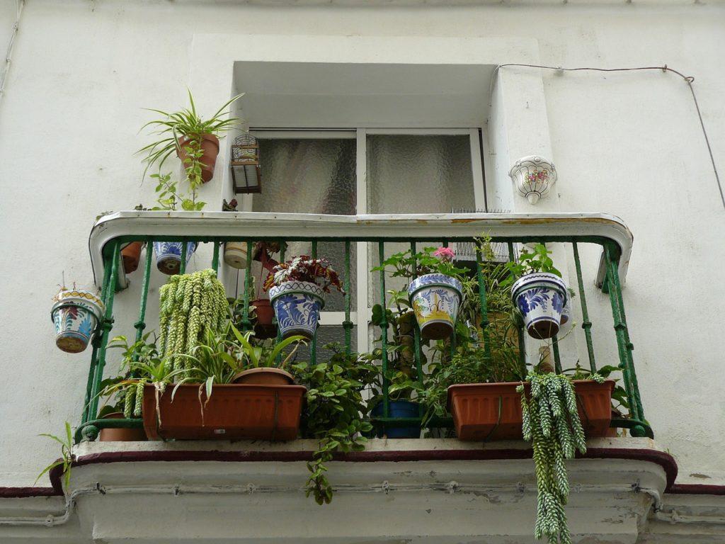 Wie überleben meine Balkonpflanzen den Urlaub?