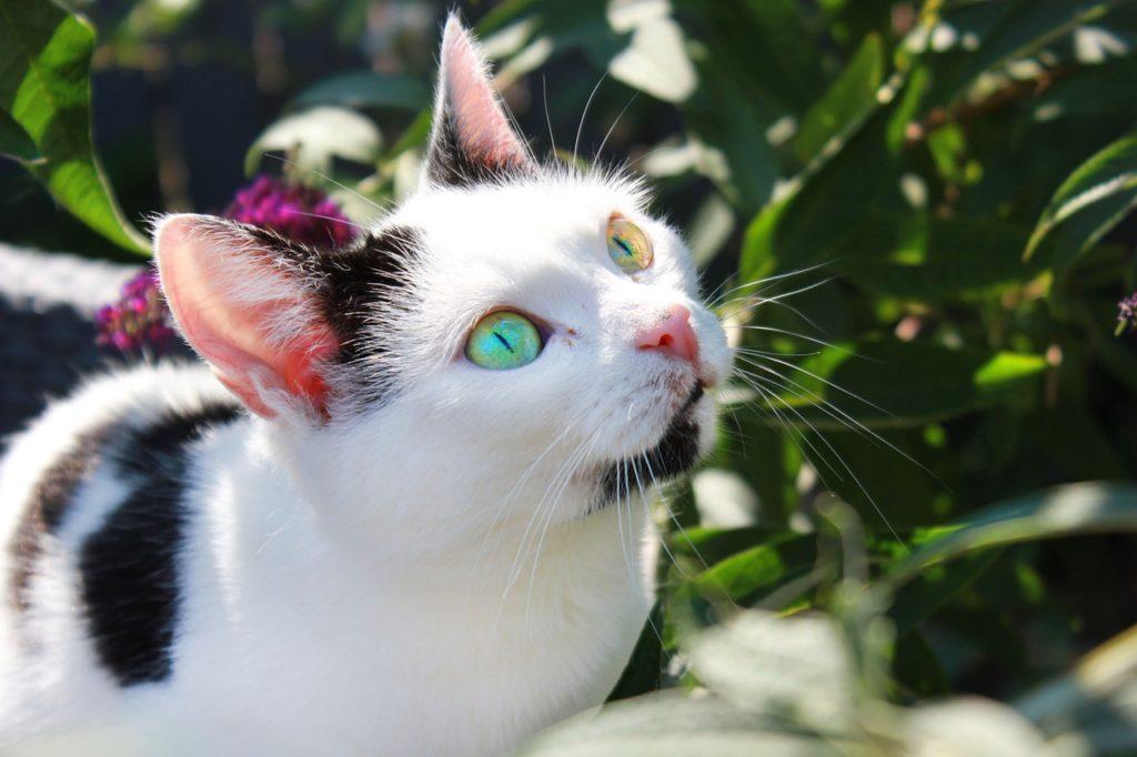 Welche Balkonpflanzen sind nicht giftig für Katzen?