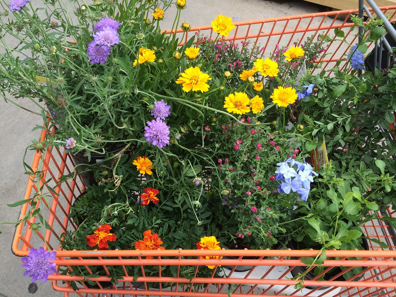 Wo kauft man Balkonpflanzen?